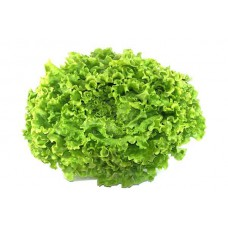 LETTUCE - GREEN (Farm)