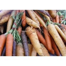 CARROTS - RAINBOW (UK) 1kg
